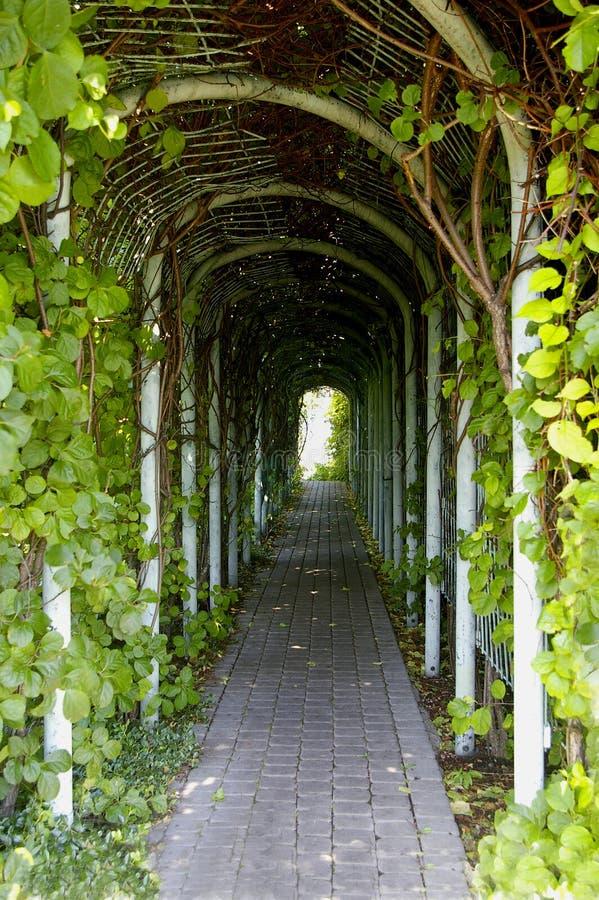korytarz green zdjęcia stock