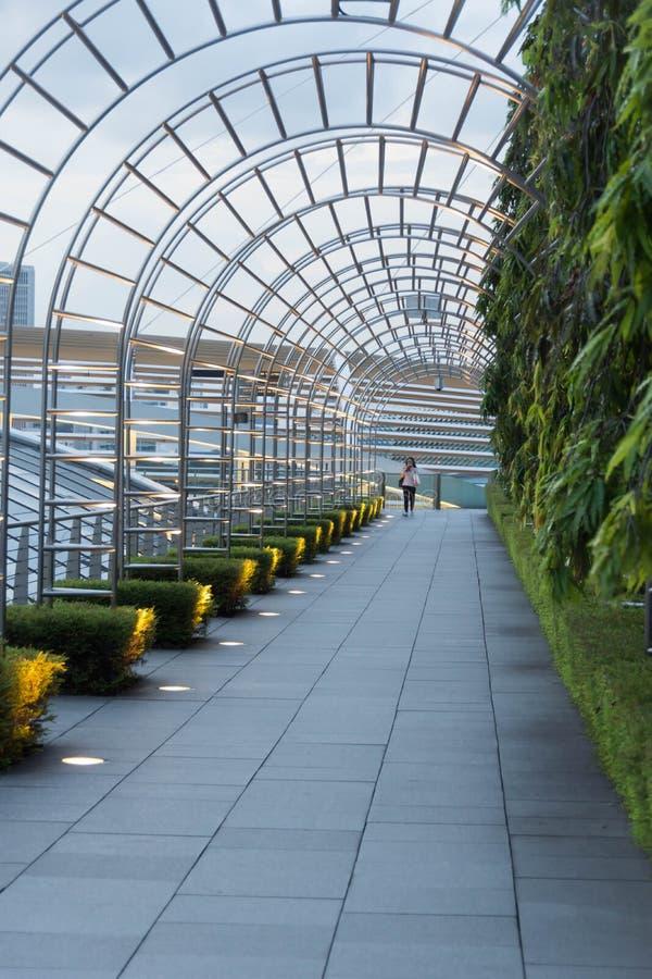Korytarz z zielonymi roślinami i światłami zdjęcie royalty free
