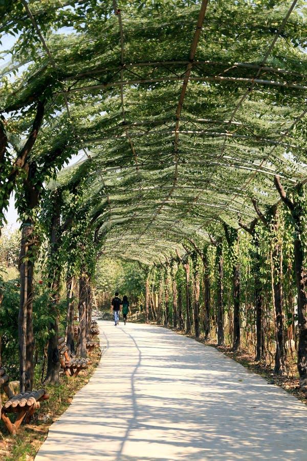 korytarz zieleń zdjęcia stock