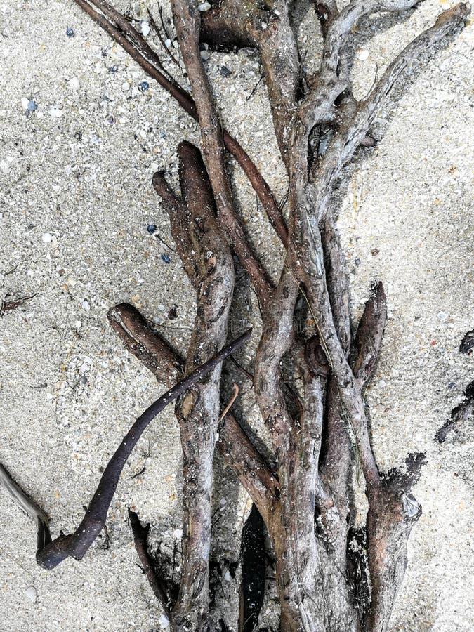Korzeń na piasku obraz royalty free