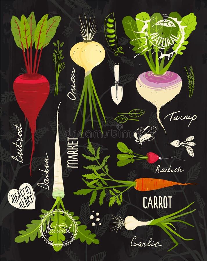 Korzeniowi warzywa z Obfitolistnymi wierzchołkami Ustawiającymi dla projekta dalej ilustracji