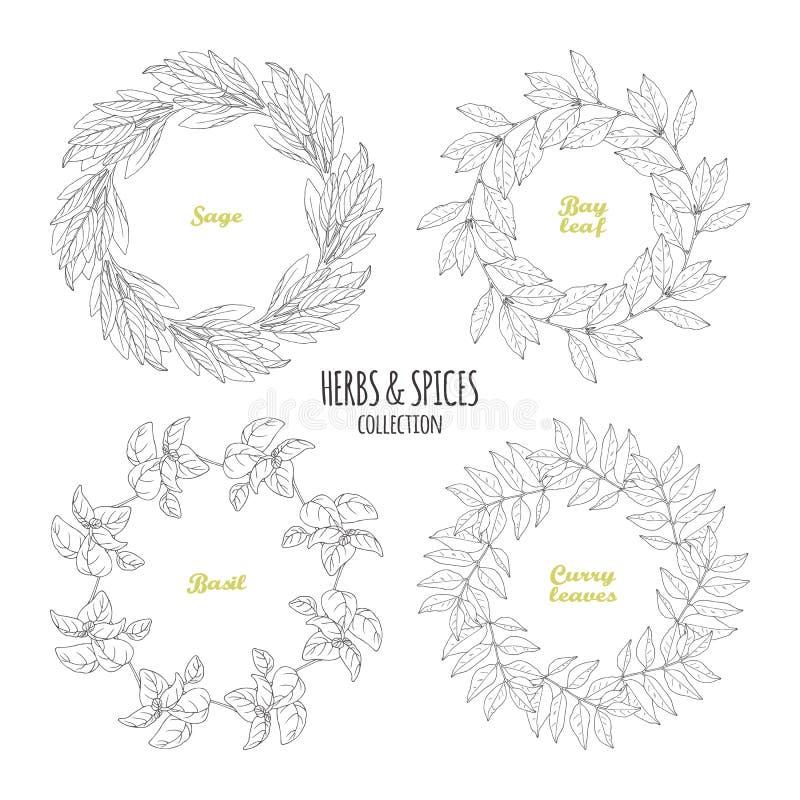 Korzenny zielarski okrąg obramia kolekcję Wręcza patroszoną mędrzec, podpalany liść, basil, curry ilustracja wektor