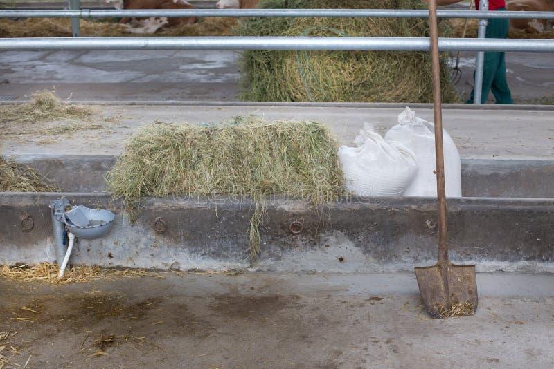 Kos för matning krubba för betong in i stall arkivbilder