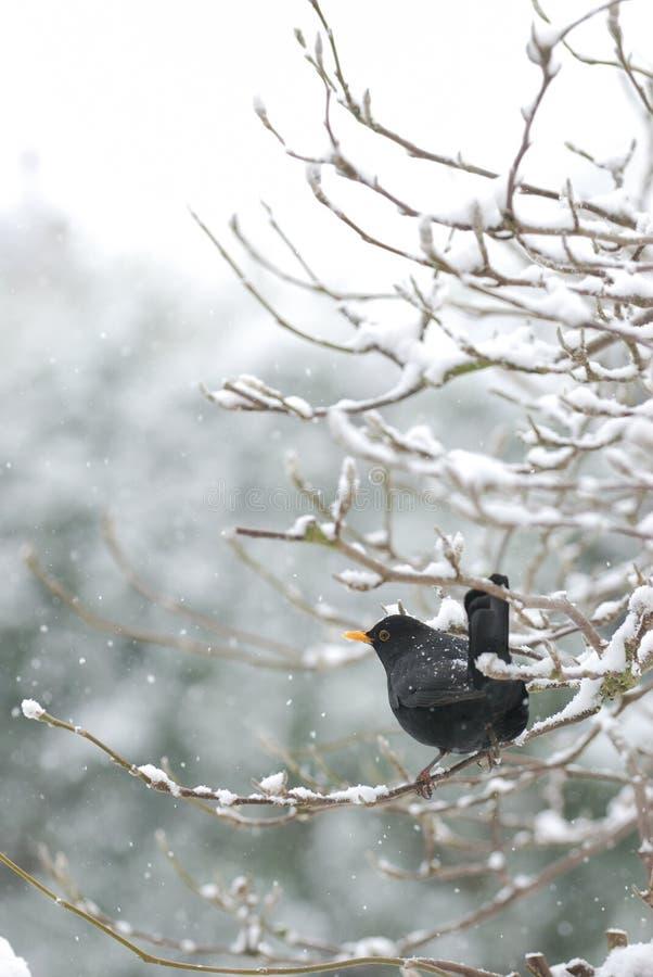 kosa śnieg zdjęcia royalty free