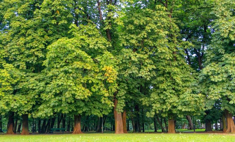 Kosciuszko Park, Cracow, Poland stock photography