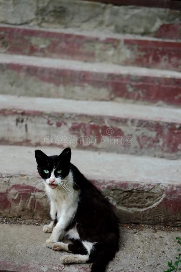 Kosecka stray near a house entrance in the street royalty free stock photo