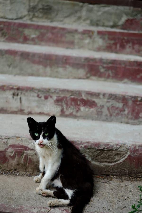 Kosecka-Umherirrender nahe einem Hauseingang in der Straße lizenzfreies stockfoto
