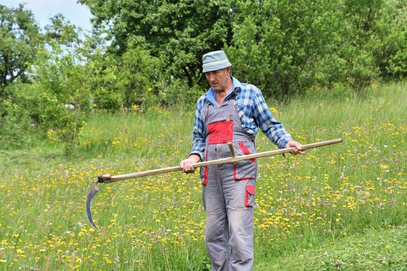 Kosić trawy w wioska tradycyjnym sposobie z kosą zdjęcia royalty free