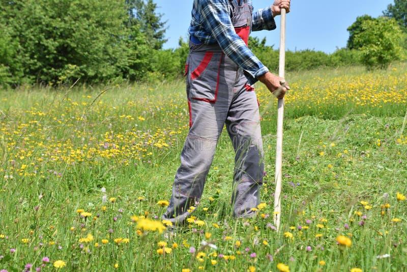 Kosić trawy w wioska tradycyjnym sposobie z kosą zdjęcie royalty free