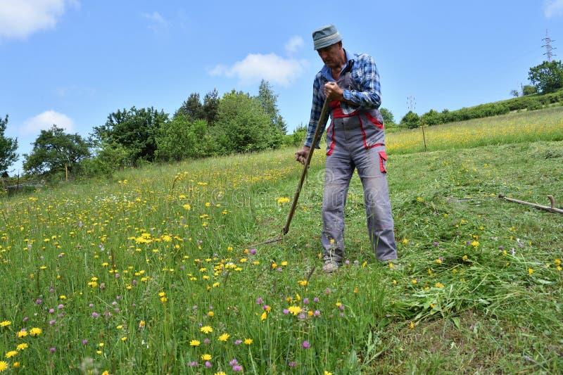 Kosić trawy w wioska tradycyjnym sposobie z kosą zdjęcie stock