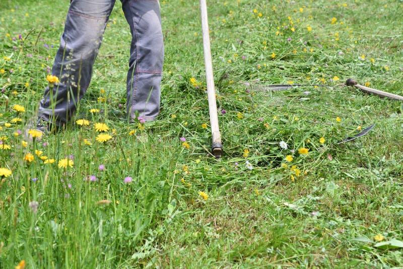 Kosić trawy w wioska tradycyjnym sposobie z kosą obraz royalty free