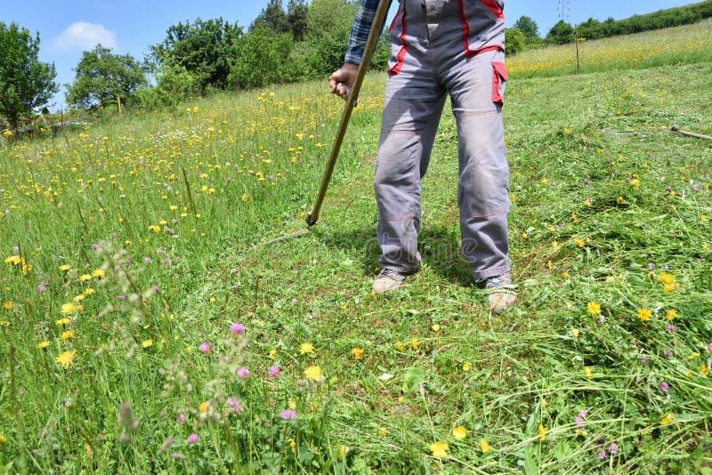 Kosić trawy w wioska tradycyjnym sposobie z kosą obrazy royalty free
