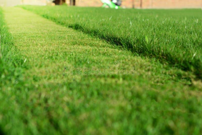 kosisz trawnik, Perspektywa zielonej trawy rżnięty pasek obraz royalty free