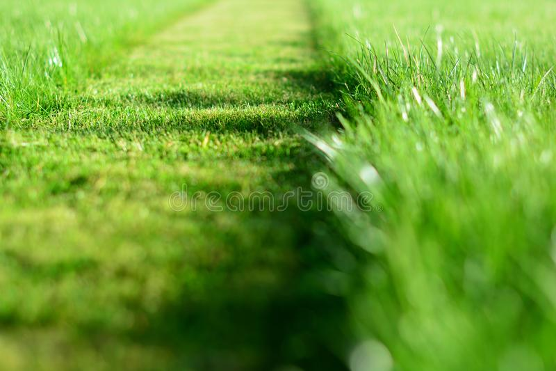 kosisz trawnik, Perspektywa zielonej trawy rżnięty pasek Selecti zdjęcia royalty free