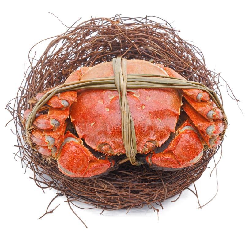Kosmaci kraby na gniazdeczku odizolowywającym w bielu obraz royalty free