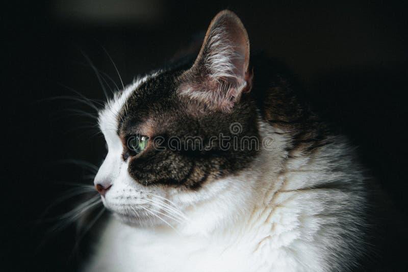 Kosmata biała kot zieleń przyglądająca się zdjęcie stock