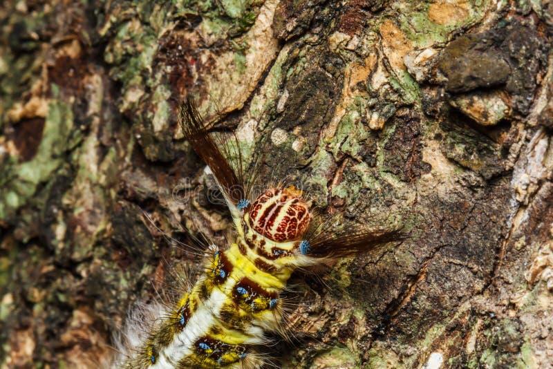 Kosmata gąsienica na drzewie obraz royalty free