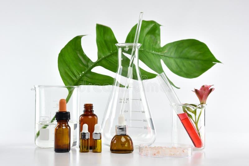 Kosmetyczni butelka zbiorniki z zielonymi ziołowymi liśćmi i naukowym glassware, Pusty etykietka pakunek dla oznakować egzamin pr zdjęcia stock