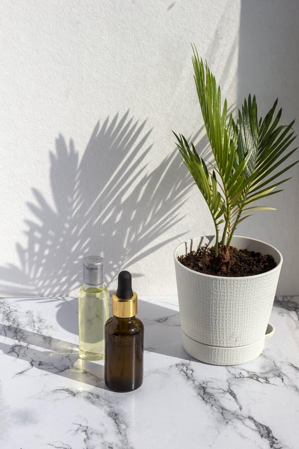 Kosmetyczni skincare produkty na marmurowym tle z palmowymi liśćmi ocieniają Szklana butelka naturalny olej, nowożytny pojęcie or fotografia royalty free