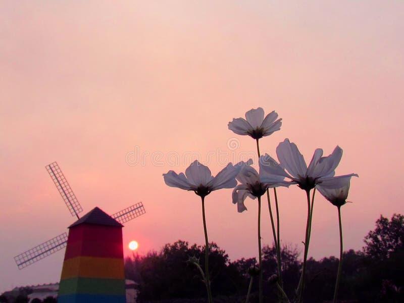 Kosmosblumen mit den Farben des Sonnenunterganghintergrundes lizenzfreie stockfotografie
