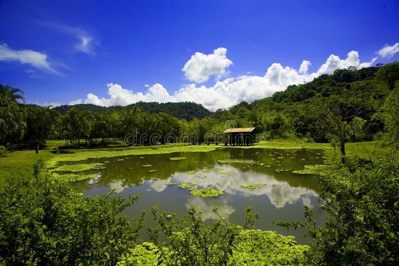 kostaryka fotografia royalty free