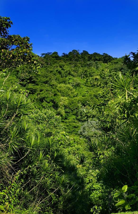 kostaryka zdjęcia stock