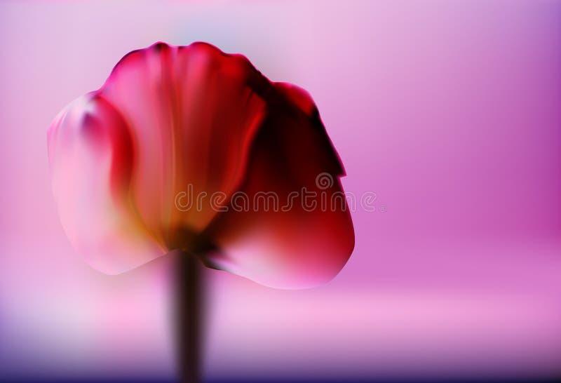 Kostbare rote Blume Tulpe an einem unscharfen Goldhintergrund romantischen Valentinsgruß ` s Tag Romantischer abstrakter Hintergr vektor abbildung