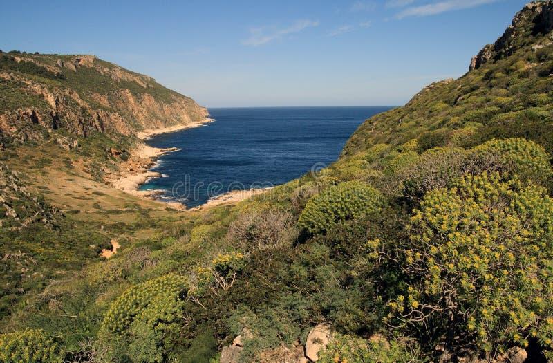 Kosten und Mittelmeervegetation lizenzfreie stockfotografie