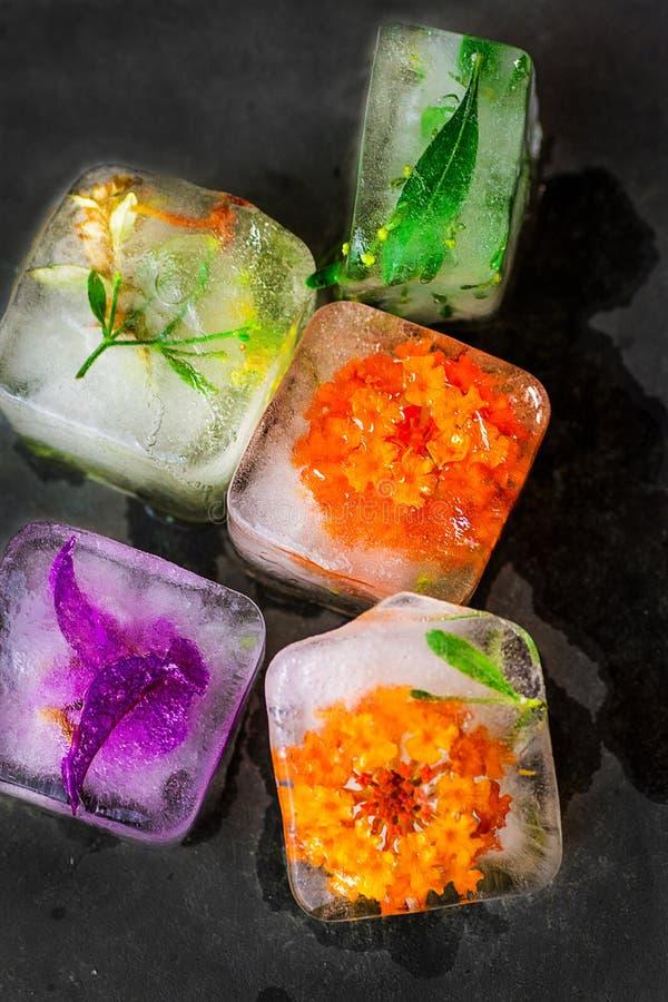 Kostki lodu z zamarzniętymi kolorowymi kwiatów ziele, roślinami topi na zmroku i drylują tło Piękno, twarzy skóry opieki pojęcie  obraz royalty free
