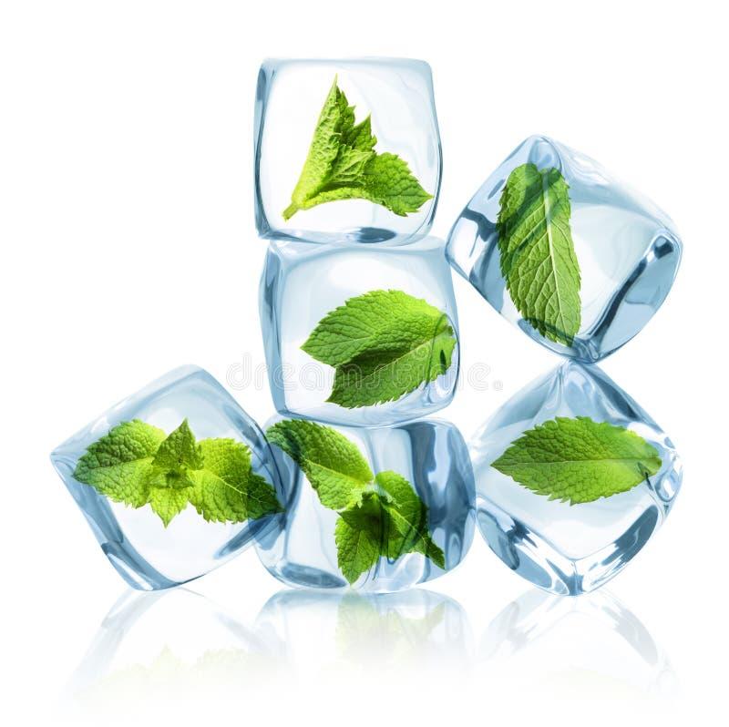 Kostki lodu z zielonymi nowymi liśćmi obrazy stock