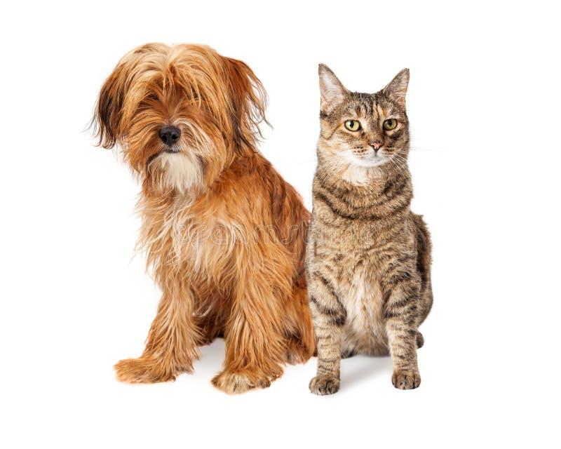 Kostrzewiasty pies i Tabby kot Siedzi Wpólnie zdjęcia royalty free