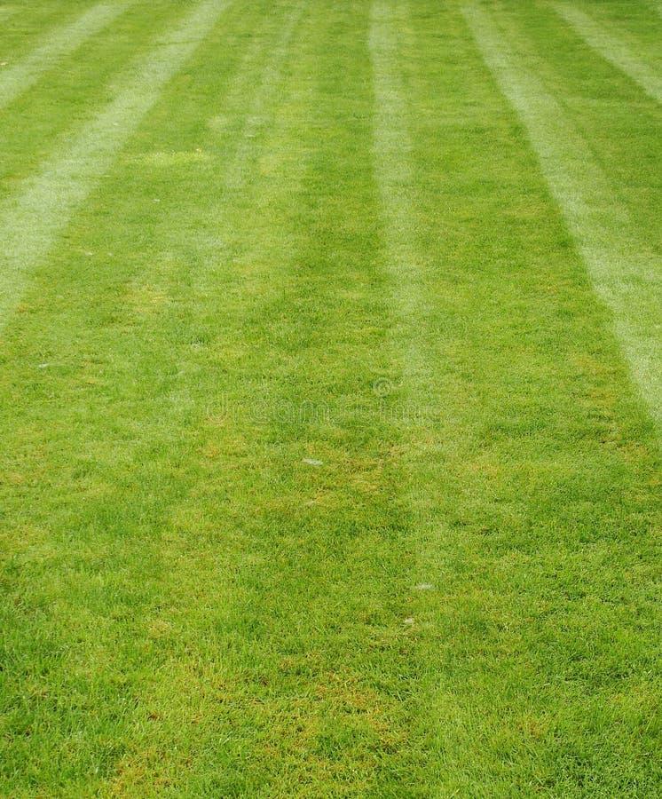 kosząca świeżo trawa pokazywać lampas zdjęcia stock