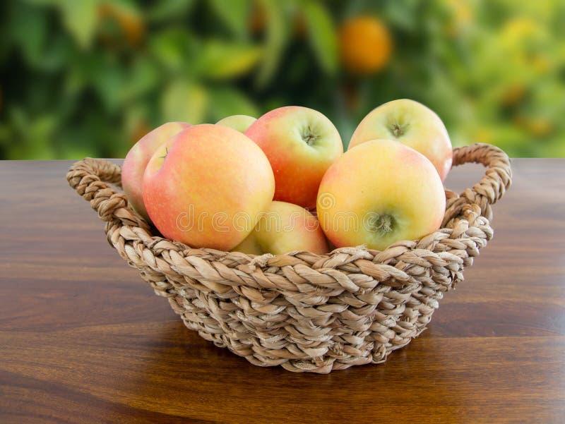 Kosz jabłka w ogródzie obraz stock