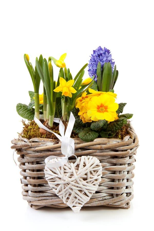 kosz kwitnie wiosna fotografia royalty free
