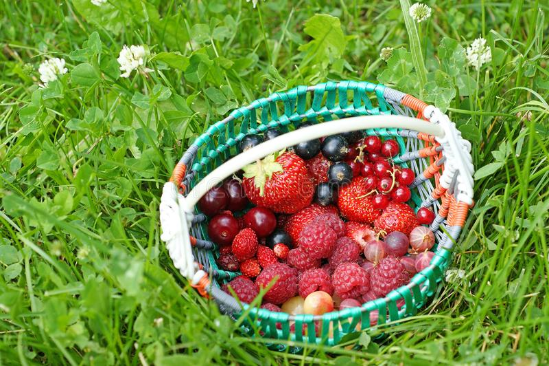 Kosz ogrodowe jagody obraz stock