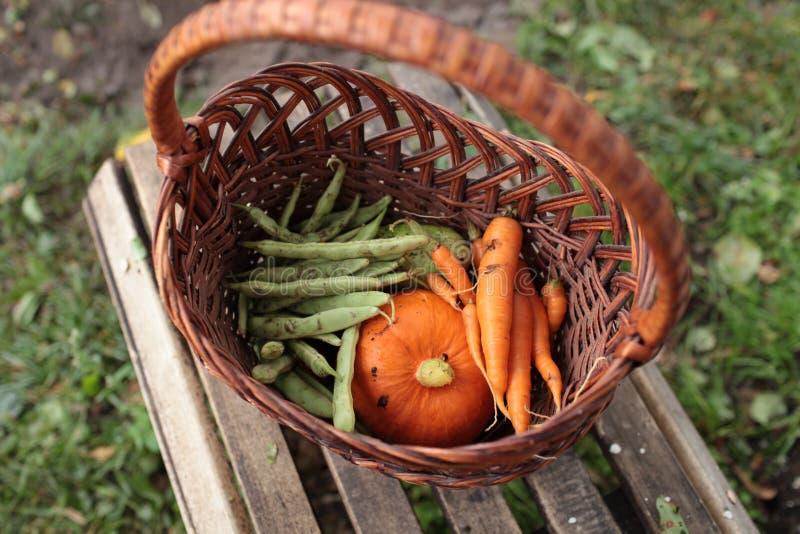 Kosz organicznie ogrodowi warzywa zdjęcie royalty free