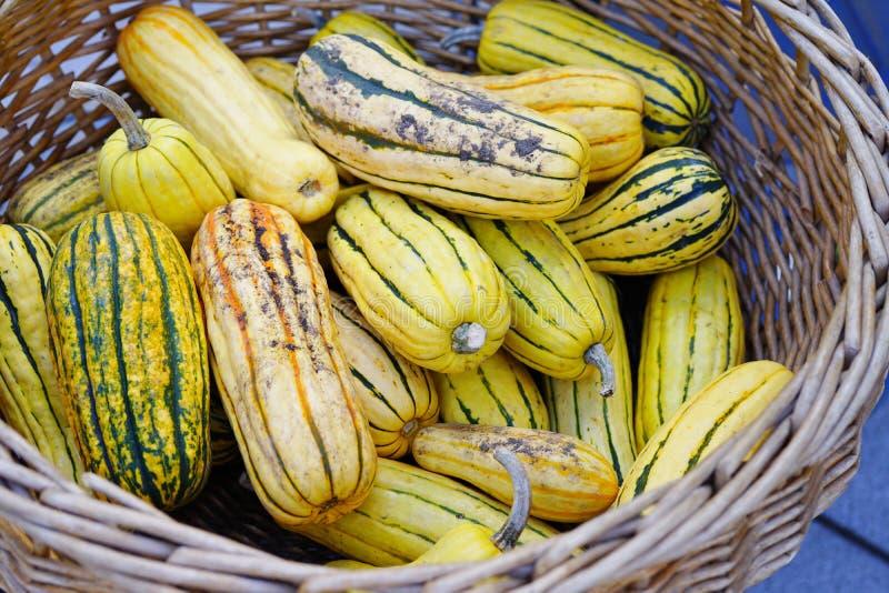 Kosz pasiasty koloru żółtego i zieleni delicata kabaczek w spadku zdjęcia royalty free