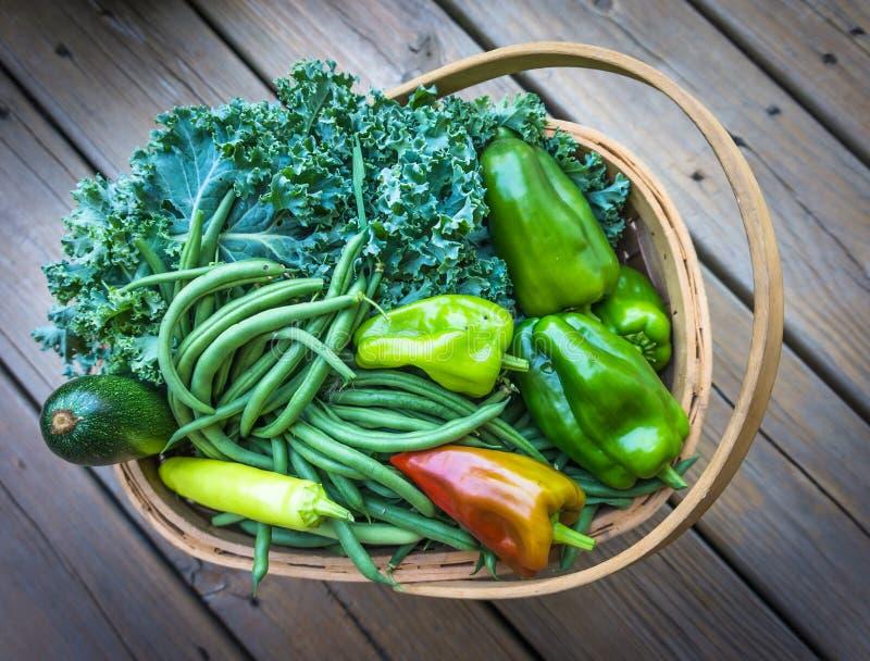 Kosz warzywa zdjęcie stock