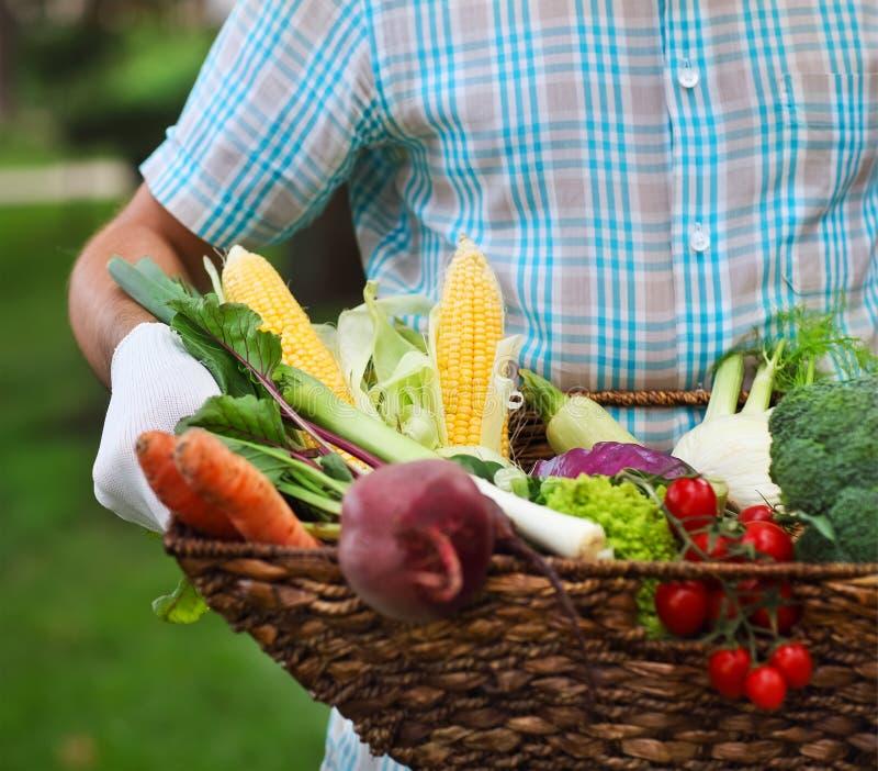 Kosz wypełniał świeżych warzywa w rękach mężczyzna fotografia royalty free