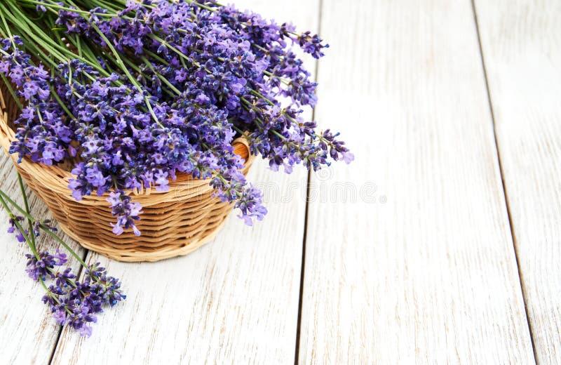 Kosz z lavanda kwiatami zdjęcia stock