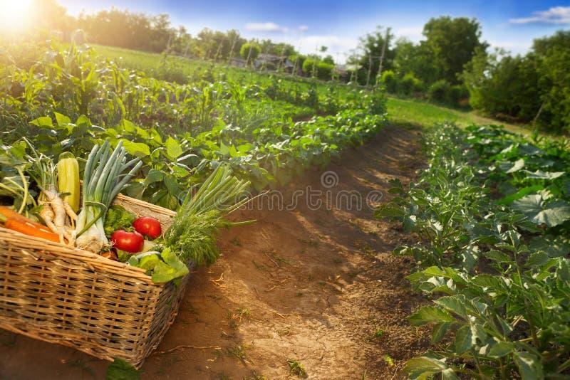 Kosz z mieszanymi warzywami na ziemi obrazy royalty free