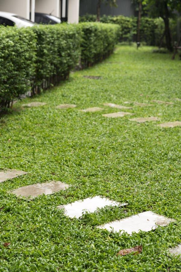 koszowy spaceru sposób na boisku, Zielony gazonu wzór, Zielonej trawy na obrazy stock