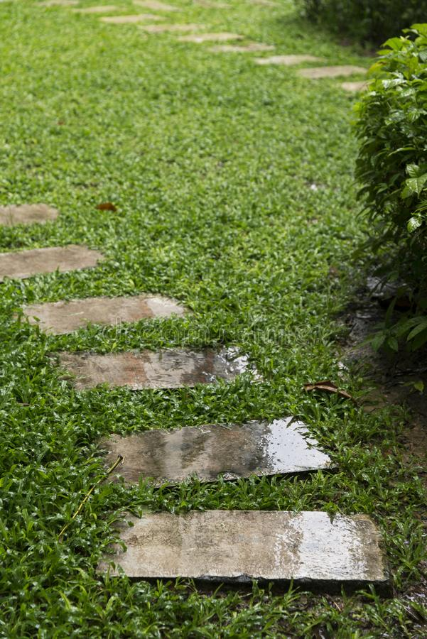 koszowy spaceru sposób na boisku, Zielony gazonu wzór, Zielonej trawy na fotografia stock