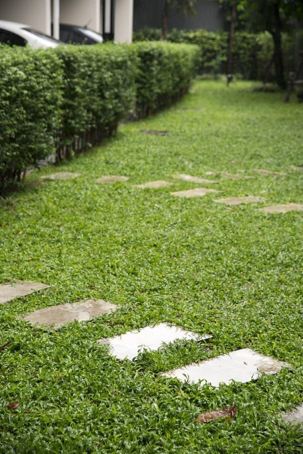 koszowy spaceru sposób na boisku, Zielony gazonu wzór, Zielonej trawy na obrazy royalty free