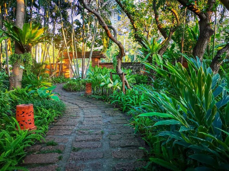 Koszowy wzór brązu laterytu przejście w tropikalnym ogródzie, greenery paprociowej roślinie, krzaku i krzaku, dekoruje z pomarańc fotografia royalty free