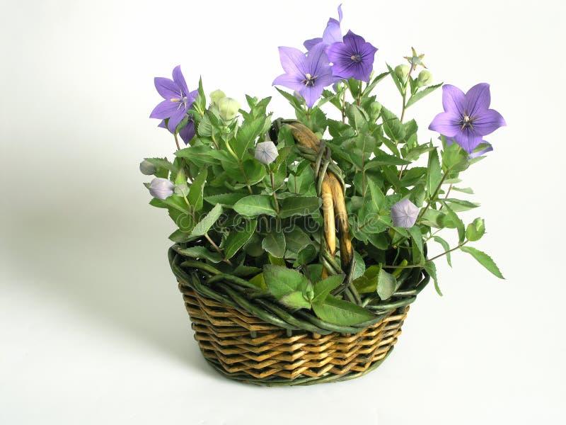koszykowi pełne kwiaty zdjęcia stock