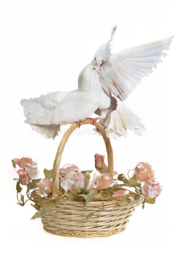 koszykowy gołąbek kwiatów target232_1_ obraz royalty free