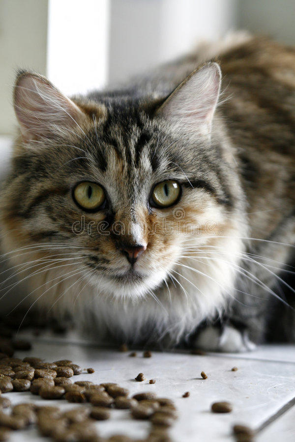 kotów obrazy stock