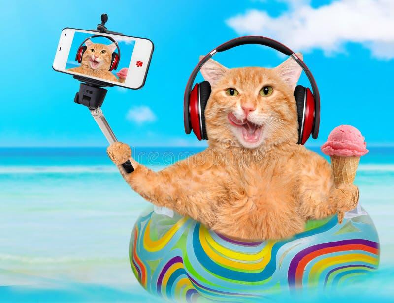 Kotów hełmofony bierze selfie wraz z smartphone obraz stock
