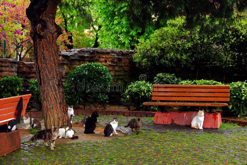 kotów Istanbul parka bezpański fotografia stock